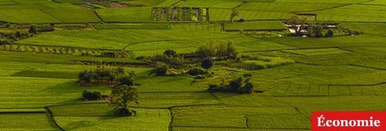 Economie._Agriculture_ok.jpg